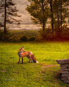 Maine Metal Prints - One Red Fox Metal Print by Bob Orsillo