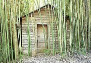 Bamboo House Framed Prints - One Room House with Bamboo Framed Print by Renee Trenholm