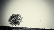 Black Tree Posters - One tree Poster by Angela Doelling AD DESIGN Photo and PhotoArt