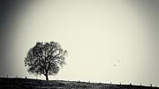 Angela Doelling AD DESIGN Photo and PhotoArt - One tree