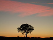 Peach Colored Originals - One Tree Dawn by Brian  Maloney