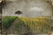 Field. Cloud Mixed Media Framed Prints - One Tree Framed Print by Svetlana Sewell