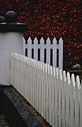 White Picket Fence Framed Prints - One Two Three Many Framed Print by Odd Jeppesen