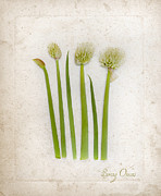 Spring Onion Framed Prints - Onion Art Framed Print by Linde Townsend