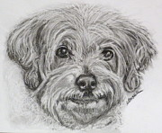 Pup Drawings Framed Prints - Only You Framed Print by Susan A Becker