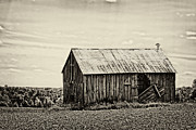 Rundown Barn Framed Prints - Open Door Framed Print by Tim Wilson