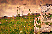 Vintage Chair Prints - Open Field Print by Kathy Jennings