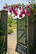 Rose Blooms Posters - Open garden gate with roses Poster by Elena Elisseeva