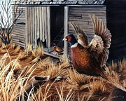 Pheasant Drawings Prints - Open House Print by Sharon Molinaro