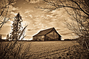 Horse And Buggy Prints - Open Meadow Barn in Black and White Print by Steve McKinzie