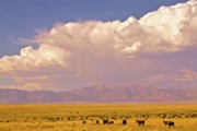 Thunderhead Photos - Open Range by Gus McCrea