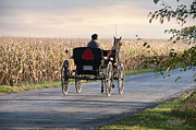 Amish Buggy Photos - Open Road Open Buggy by David Arment