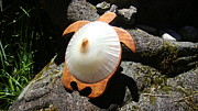 Shell Sculpture Originals - Opihi Honu by Jerry Quist