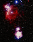 Orion Nebula Art - Optical Image Of Horsehead And Great Orion Nebula by Celestial Image Co.