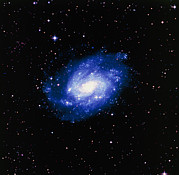 Spiral Galaxy Posters - Optical Image Of The Spiral Galaxy Ngc 300 Poster by Celestial Image Co.