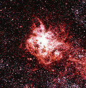 Tarantula Prints - Optical Image Of The Tarantula Nebula In Dorado Print by Celestial Image Co.