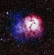 Reflection Nebula Posters - Optical Image Of The Trifid Nebula In Sagittarius Poster by Celestial Image Co.