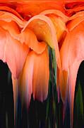Orange Abstract Print by Pat Exum