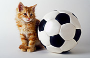 Soccer Balls Framed Prints - Orange and white kitten with soccor ball Framed Print by Garry Gay