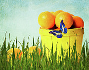 Fruit Still Life Mixed Media Posters - Orange Poster by Angela Doelling AD DESIGN Photo and PhotoArt