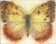 Drawing Painting Originals - orange-barred Sulphur Butterfly by Pam Ek