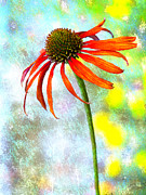 Coneflower Prints - Orange Coneflower on Green and Yellow Print by Carol Leigh