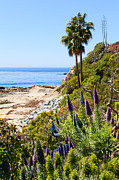 Laguna Beach Posters - Orange County California Coastline Photo Poster by Paul Velgos