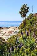 Paul Velgos - Orange County California Coastline Photo