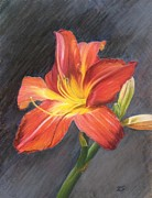 Xenia Sease - Orange Daylily