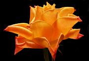 Orange Delight Print by Terence Davis