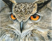 Barn Drawing Posters - Orange-Eyed Owl Poster by Carla Kurt