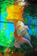 Gold Fish Photos - Orange Float by Joy Tudor