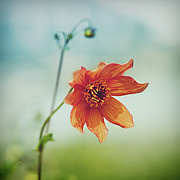 Garden Petal Image Photos - Orange Flower by Julia Davila-Lampe