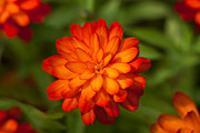 Tetyana Kovyrina - Orange flower