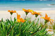 Yurix Prints - Orange flowers on the Sunny Ocean Beach. Print by Yurix Sardinelly