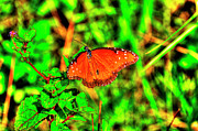 Insects Photo Originals - Orange Flutterby Too by Randy Aveille