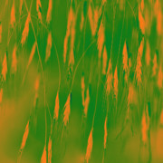 Digital Processing Prints - Orange Grass Spikes Print by Heiko Koehrer-Wagner