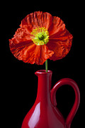 Pitchers Photos - Orange Iceland Poppy in red pitcher by Garry Gay