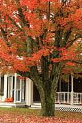 Orange Leaves And Pumpkins Print by Deborah Benoit