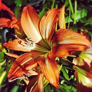 Turn Acrylic Prints - Orange Lilly Acrylic Print by Kristy Vlad