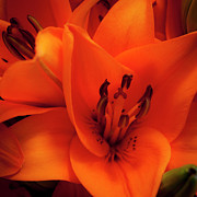 Orange Lily Print by David Patterson