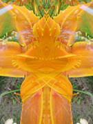 Blend Photos - Orange Lily Fantasy by Michele Caporaso