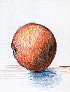 Colored Pencil Drawings - Orange by Nancy Mueller