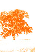 Hdr Look Photo Prints - Orange Oak Print by Alan Look