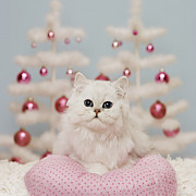 Animals At Christmas Posters - Orange Persian Cat Sitting On Pink Pillow With Christmas Decoration Poster by GK Hart/Vikki Hart