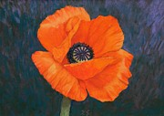 Xenia Sease - Orange Poppy