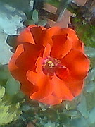 Archana Saxena - Orange Rose