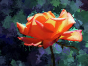 Christopher Evans - Orange Rose