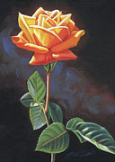 Steven Tetlow - Orange Rose no. 1