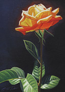 Steven Tetlow - Orange Rose no. 2